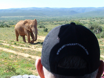 Visit Addo Elephant National Park
