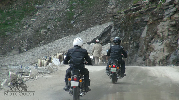 A goat herd blocking the road - patience please
